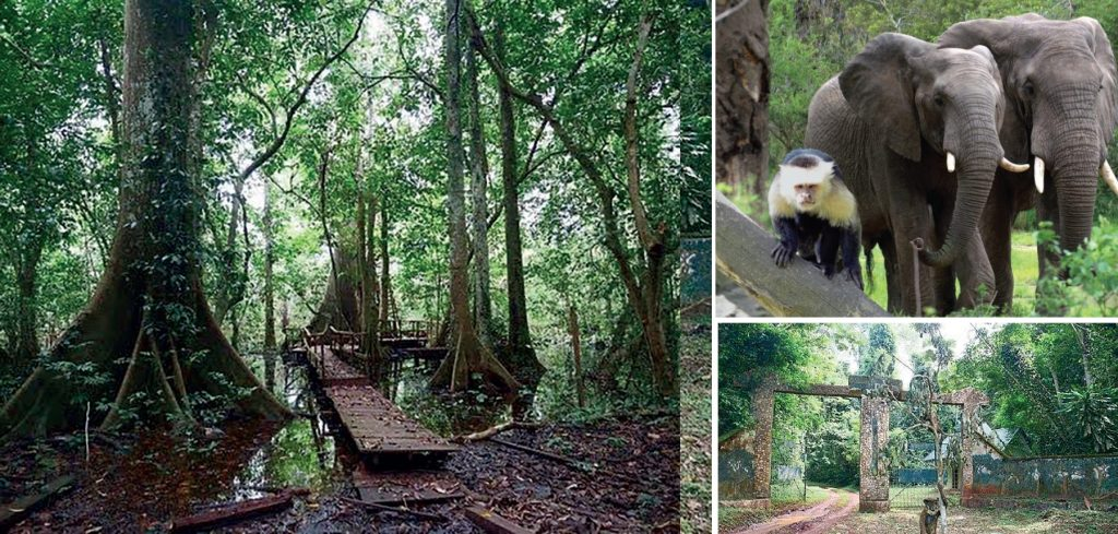 Okomu National Park